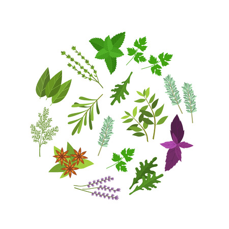 Cartoon Color Herbs Spices Round Design Template. Vector