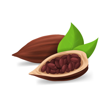 Realistic Detailed 3d Dry Cocoa Pods Ingredient of Sweet Chocolate and Dessert. Vector illustration of Bean with Seeds