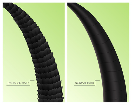 Realistic Detailed 3d Damaged and Normal Hair Cards Set. Vector