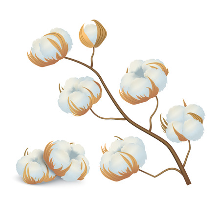 Realistic Detailed 3d Cotton Flowers Branch Natural Material for Soft Quality Textile. Vector illustration of Fluffy Flower