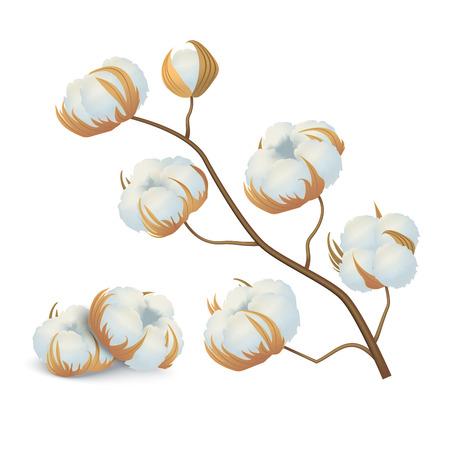 Realistisches detailliertes 3D-Baumwollblumen-Zweig natürliches Material für weiches Qualitätsgewebe. Vektor-Illustration der flauschigen Blume