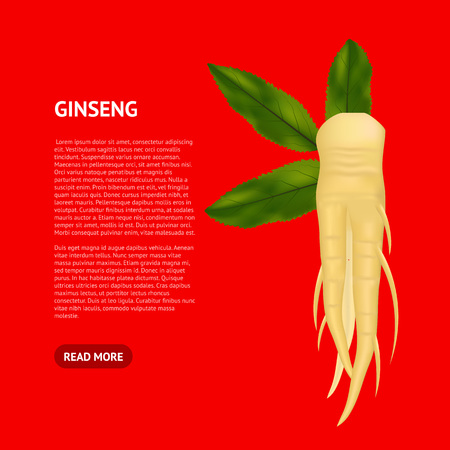 Realistic Detailed 3d Ginseng Root and Leaves Card Plant Medicine Asian Symbol of Health and Energy. Vector illustration of Natural Ingredient Tincture
