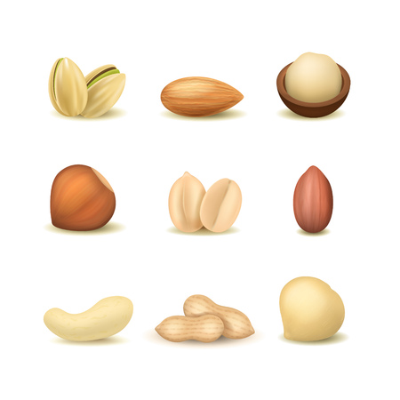 Realistic Detailed 3d Different Types Nuts Set Include of Peanut, Hazelnut, Almond, Cashew and Pistachio. Vector illustration