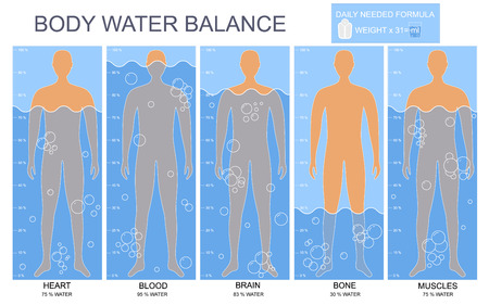 Cartoon Body and Water Chart Infographics Card Poster. Vector