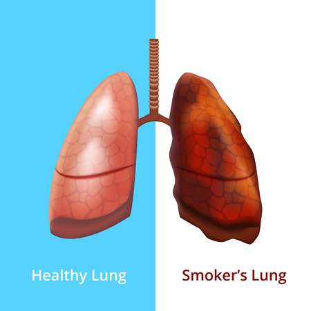 Realistic Detailed 3d Human Lungs Internal Organ. Vector