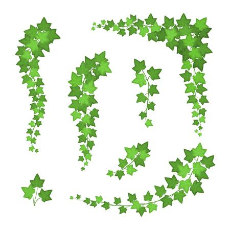 Ensemble de différents types de feuilles de lierre vert. Vecteur