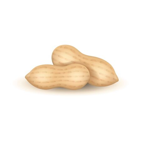 Realistic Detailed 3d Groundnut Nuts Set. Vector