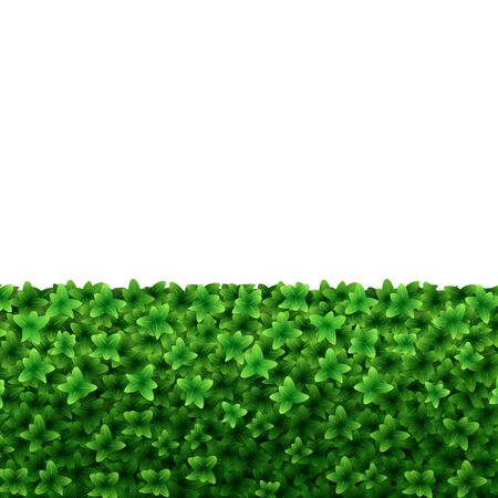 Realistic Detailed 3d Green Hedge on a White Closeup View Decor Foliage Shrub for Garden. Vector illustration