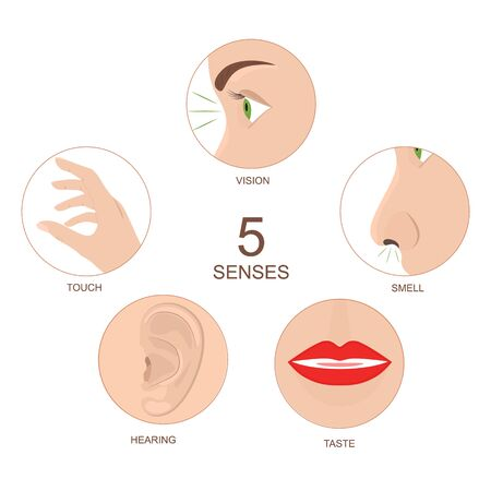 Cartoon Human Anatomy Senses Infographics Concept Card Poster. Vector