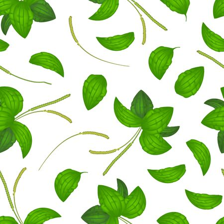 Realistic Detailed 3d Green Leaves Plantago Major Seamless Pattern Background on a White Organic Nature Medicinal Herb . Vector illustration of Healthy Plantain Foliage