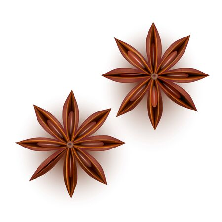Realistic Detailed 3d Star Aniseed Set. Vector