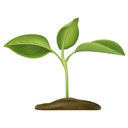Realistic Detailed 3d Green Plant Seedling Growing in Soil Closeup View. Vector illustration of Gardening Concept