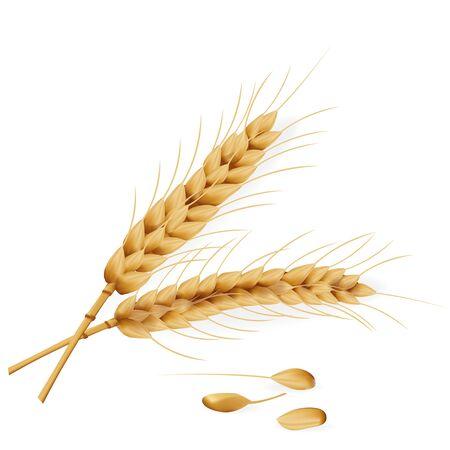 Realistische detaillierte 3D-Weizen-Symbol für Landwirtschaft und Brot. Vektor-Illustration der natürlichen Pflanze
