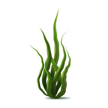 Realistische detaillierte 3D-Grüne Spirulina-Algen. Vektor Vektorgrafik