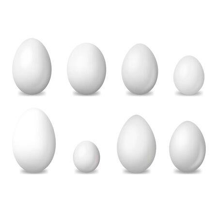 Realistic Detailed 3d White Blank Bird Eggs Set. Vector Illustration