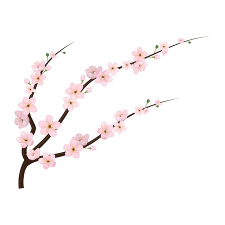 Realistic 3d Detailed Blooming Cherry Blossom. Vector