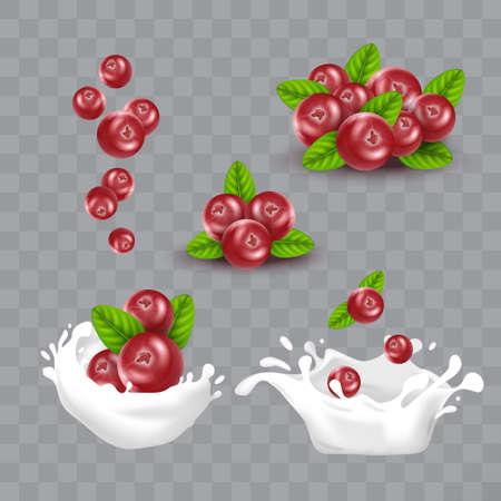 Realistic Detailed 3d Red Cranberry Berries Set. Vector Ilustração