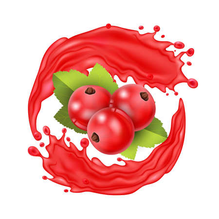 Realistic Detailed 3d Red Currant Berries with Splash Juice. Vector