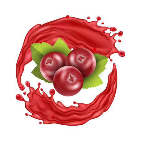 Realistic Detailed 3d Red Cranberry Berries with Splash Juice. Vector