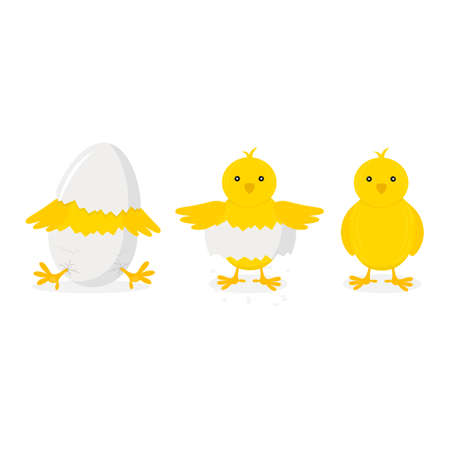 Cartoon Chicken Hatching Phases Set on a White. Vector Ilustração