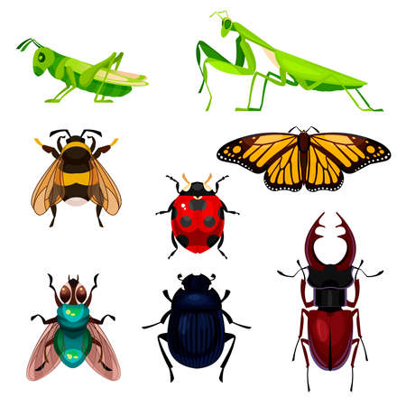 Cartoon Color Different Insects Icons Set. Vector Ilustração