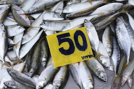 fish vendor: Fresh fish sale in the market in Thailand