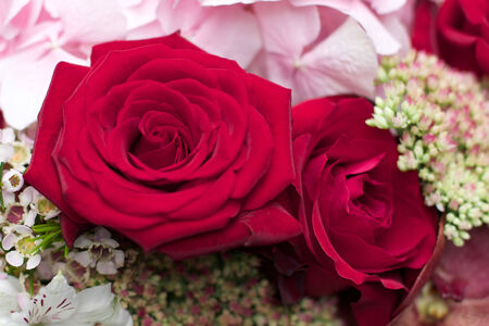 Red rose and hydrangea Bouquet flower for a celebration photo