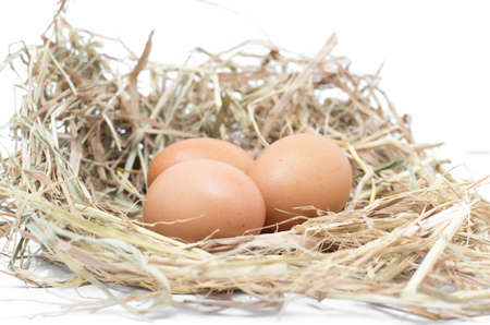 Nest With Eggs on the white background photo