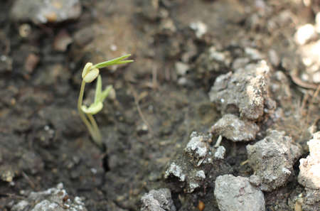 new life: New life plant growing in the solitude