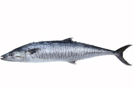 Verse koning makreel vissen geïsoleerd op de witte achtergrond
