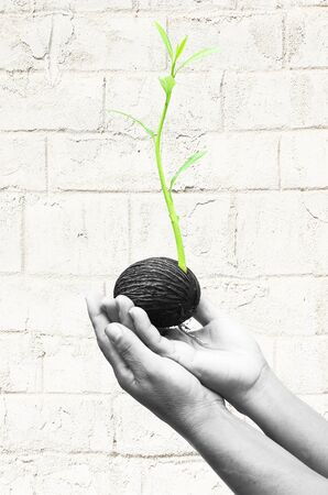 conceiving: Hand holding seed is growing a new life on white wall background Stock Photo