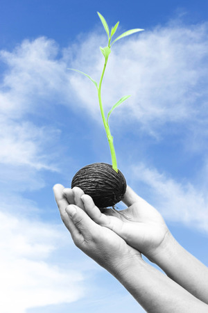 Hands holding and caring a new life plant and blue sky in concept save the world photo