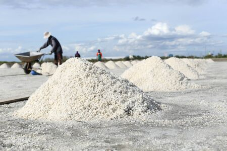 pan tropical: People making a pile of salt in the salt pan in Thailand