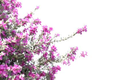 Defocus Beautiful pink purple flower blooming against green leaves background