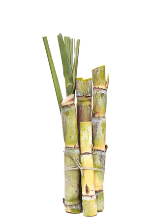 cut grass: Stump of sugar cane isolated on white background
