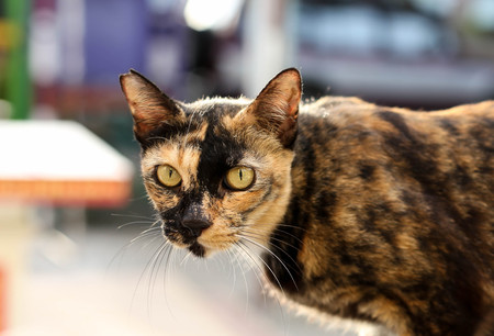 noiseless: Cat with yellow eyes on the wall looking at camera