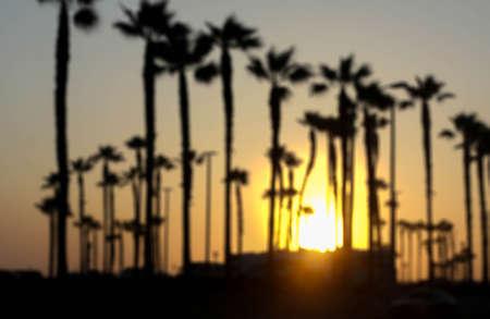 huntington beach: Blurred background sunrise at palm tree at the seaside in Huntington Beach, California Stock Photo