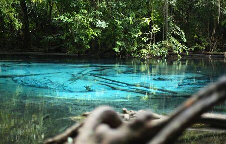 jungle animal: Nature of Emerald or Blue pond in the deep forest in Krabi Thailand