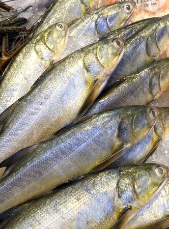fishy: Fresh fishes on ice background in the market Stock Photo
