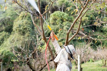 careless: Dec : 9: 15 -   At Doi Ang Khang Chaing Mai Unidentified gardener  spraying an insecticide a fertilizer to his plant