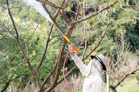 Dec : 9: 15 -   At Doi Ang Khang Chaing Mai Unidentified gardener  spraying an insecticide a fertilizer to his plant