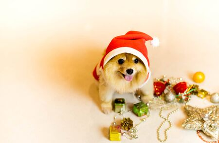 Dog wearing a santa hat with Christmas decoration Stock Photo