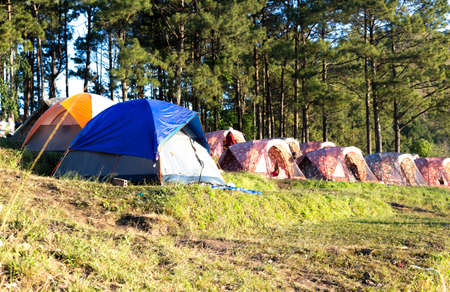 camping pitch: Selected focus on blue tent ,Camping tent on slope moutain in the forest
