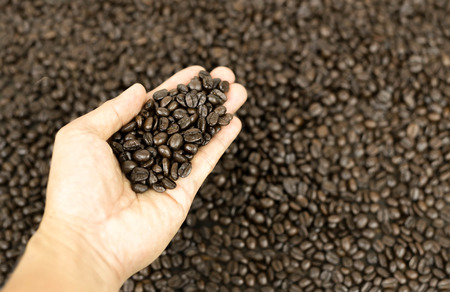 restaurateur: Coffee beans on Female hand in coffee beans background Stock Photo