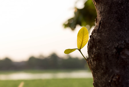 live again: New leaves sprouting growing from the tree bark