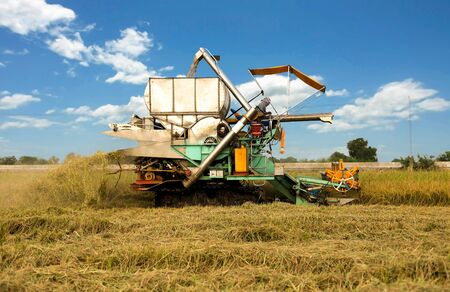 agriculture machinery: Agriculture Industrial harvesting machinery working in rice field with blue sky