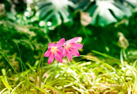 multiplicar: Beautiful pink flowers with multiply colors in background