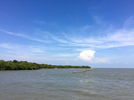 forest conservation: Landscape view of coastal forest conservation site in blue sky
