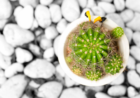 Top view cactus plant with white stone as background