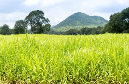 countrified: Countryside of grass filed with mountains and tree in blue sky